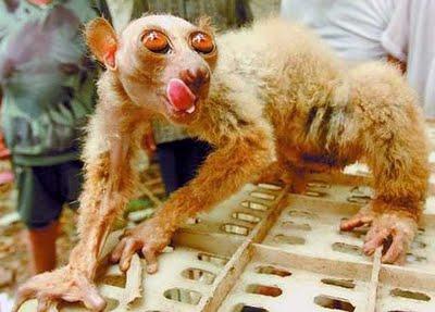 Scimmia aliena