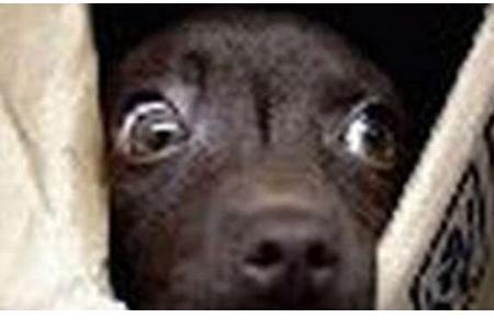 Rapimento cane
