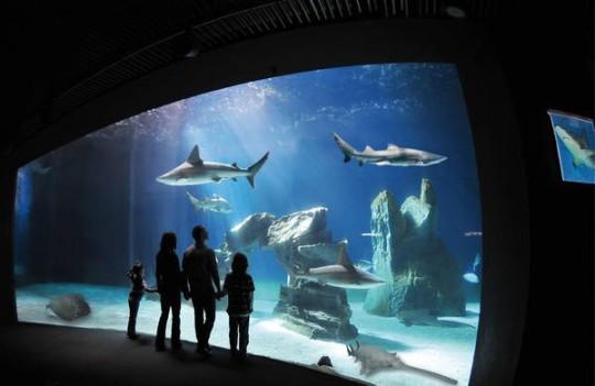 Vasca squali esplode