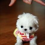 Cani piccoli e carini
