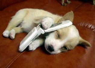 Cane chiama polizia