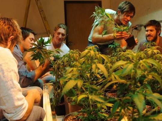 Family Marijuana