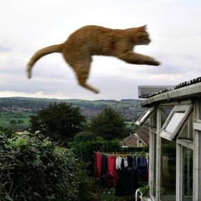 Gatto che vola