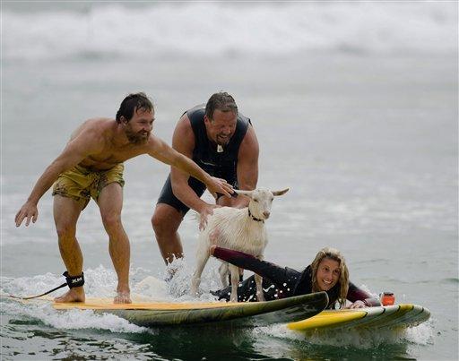 Capre Surf