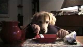 Cane che mangia con le mani