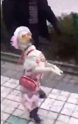 Cane vestito donna