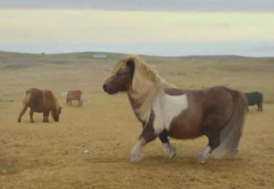 Pony Michael Jackson