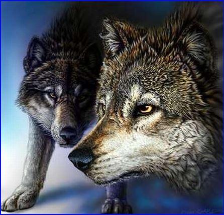 Trova 5 lupi