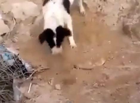 Cane seppellisce figlio