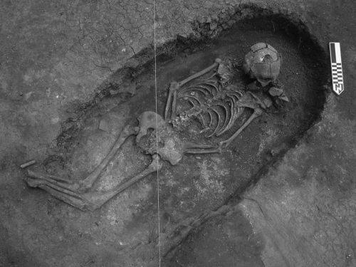 Bara scheletro