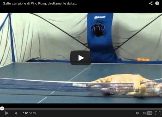 Gatto Ping Pong
