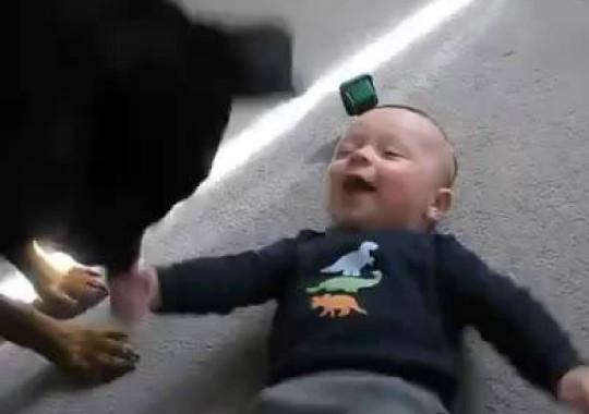 Rottweiler Bambino