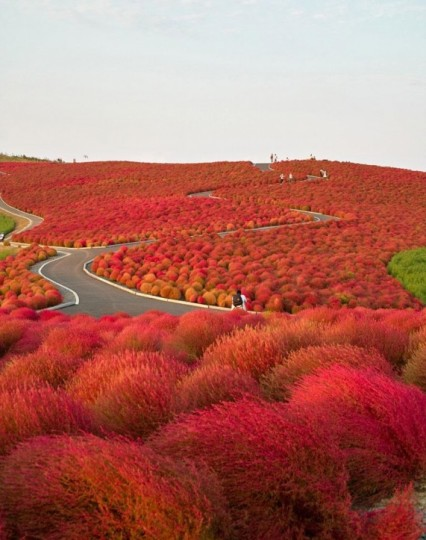 Hitachi Seaside Park, Giappone