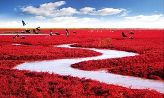 Spiaggia rossa, Panjin, Cina