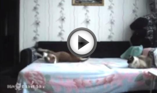 Ecco cosa fa un cane in casa quando rimane da solo