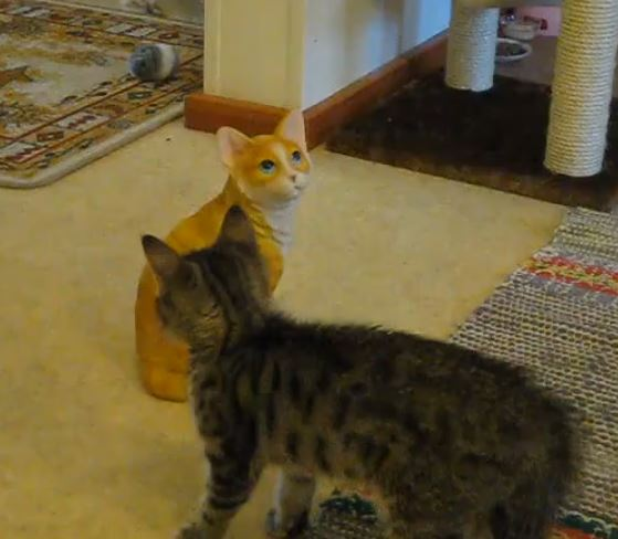 Il gattino che lotta con il suo simile in ceramica