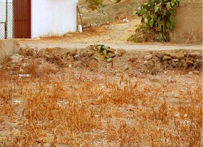 Trova gatto