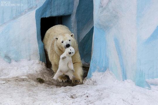 genitori-figli-animali-001
