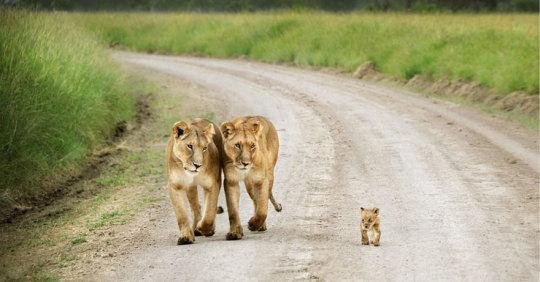 genitori-figli-animali-003