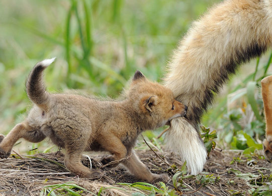 genitori-figli-animali-005