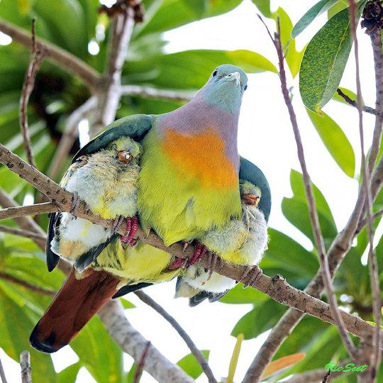genitori-figli-animali-006