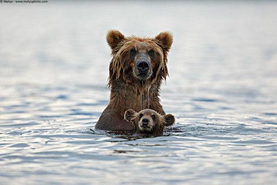 genitori-figli-animali-008