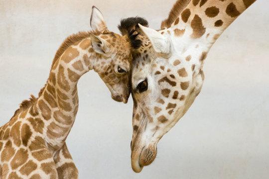 genitori-figli-animali-009