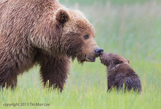 genitori-figli-animali-014