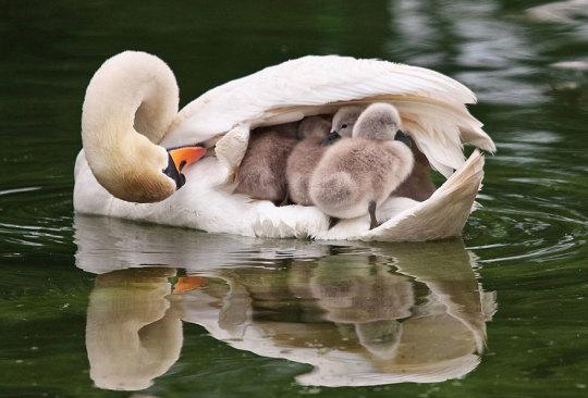 genitori-figli-animali-015