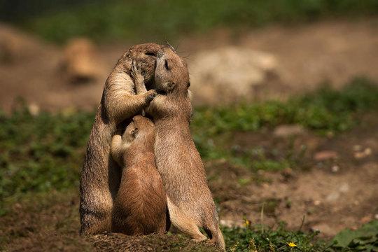 genitori-figli-animali-016