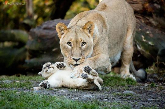 genitori-figli-animali-018