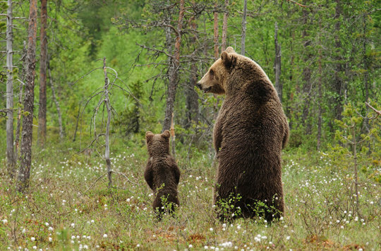 genitori-figli-animali-025