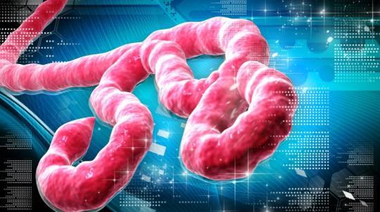 Ebola cose da sapere
