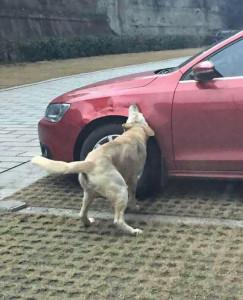 Picchia un cane