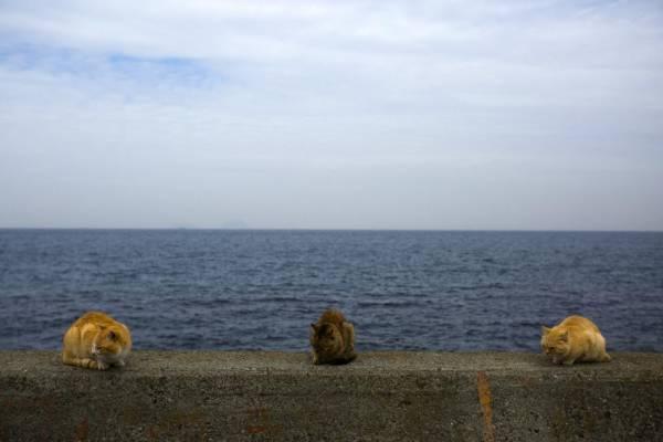 Isola Gatti 06