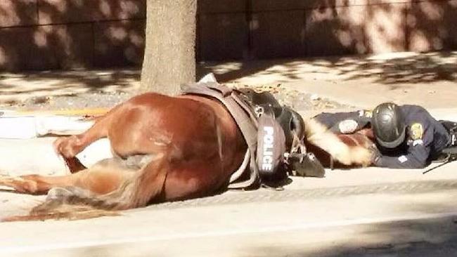 Poliziotto Cavallo